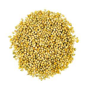Kusha Coriander Seeds
